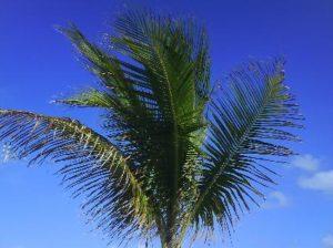 kan inte få nog av palmerna