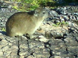 en kompis jag mötte på Cliff Path i Sydafrika