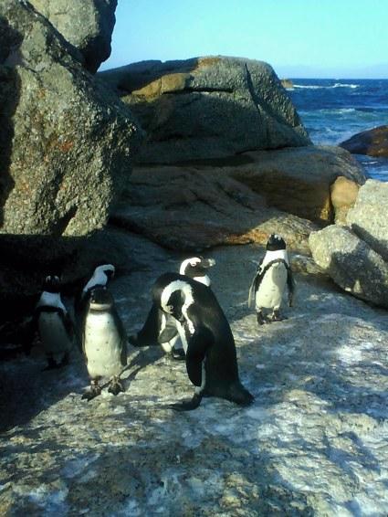 pingviner överallt