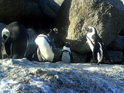 fina pinviner som hejade på