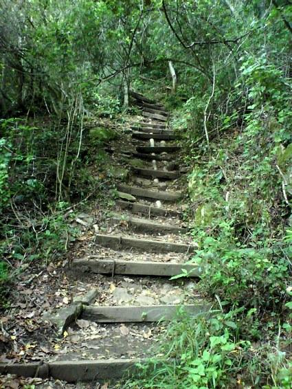 en trapp upp