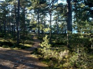 finfint i Sandhamn