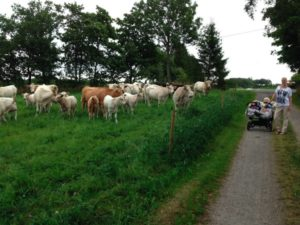 Nattning med kor