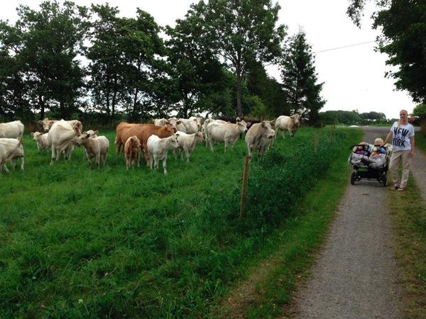 Vagnsnattning i Skåne