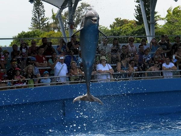 delfinhopp
