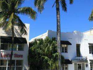 Palmer och blå himmel i Miami