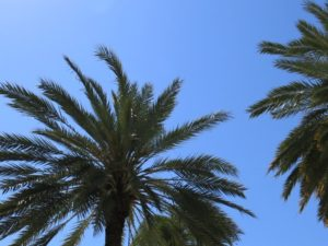 palmer i Miami