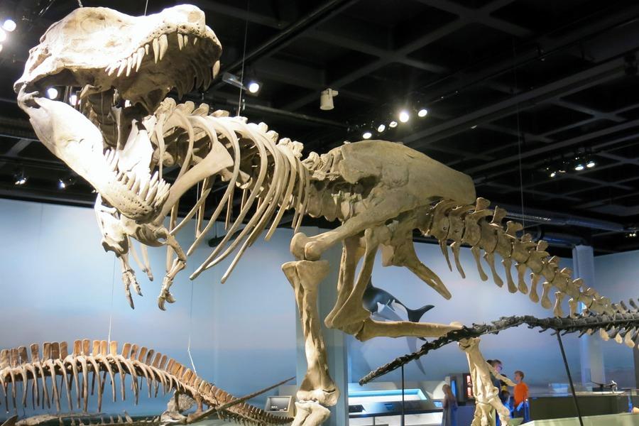 Tyra T-rex