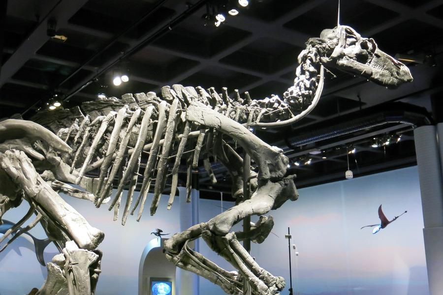 dinosaurie skelett