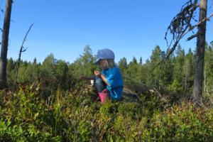 I en bärskog i Norrland