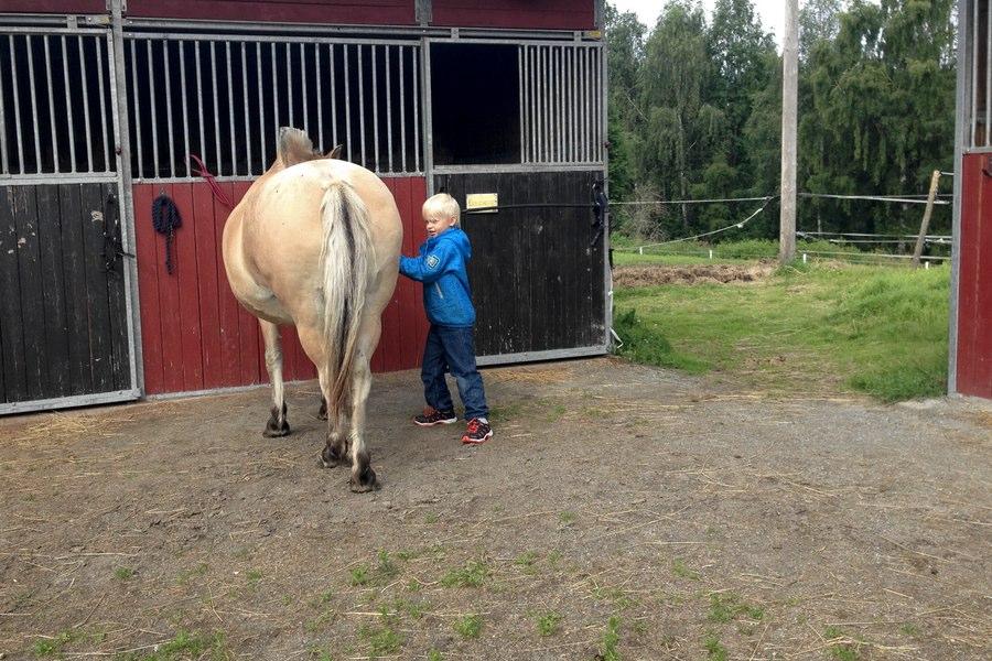 Vidar borsta hästen