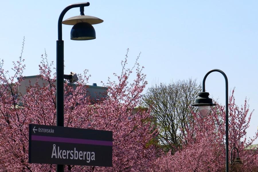 Rosa fina blommor vid Åkersberga Station