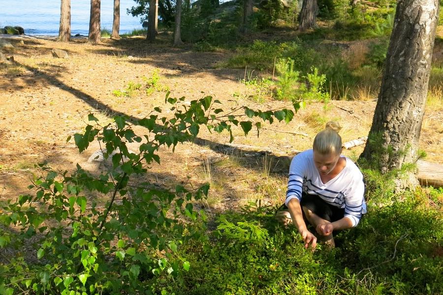 full fart i blåbärsskogen