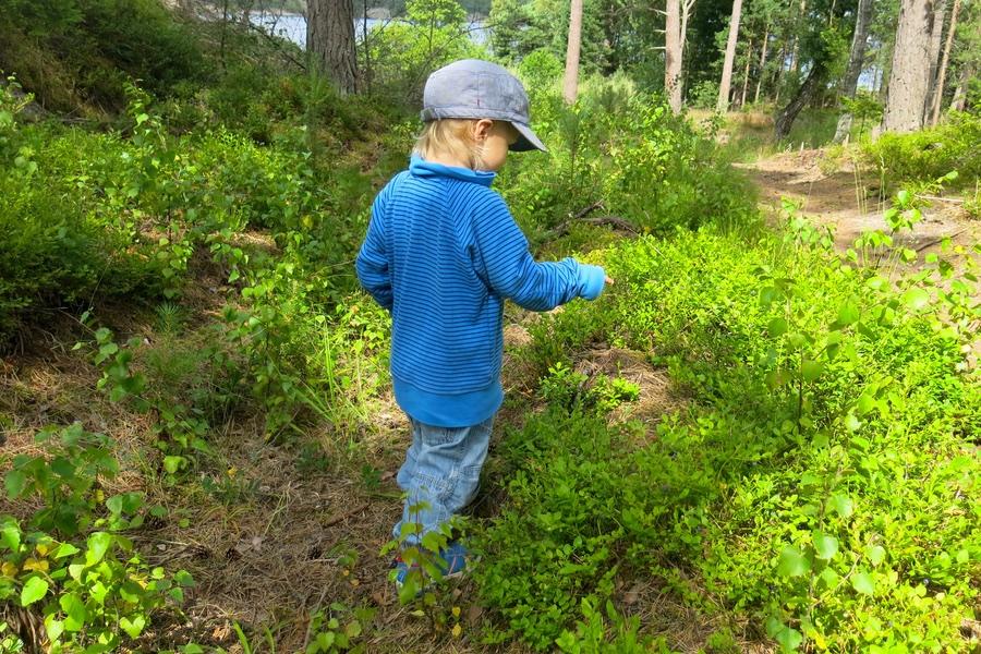 Arvid i blåbärsskogen