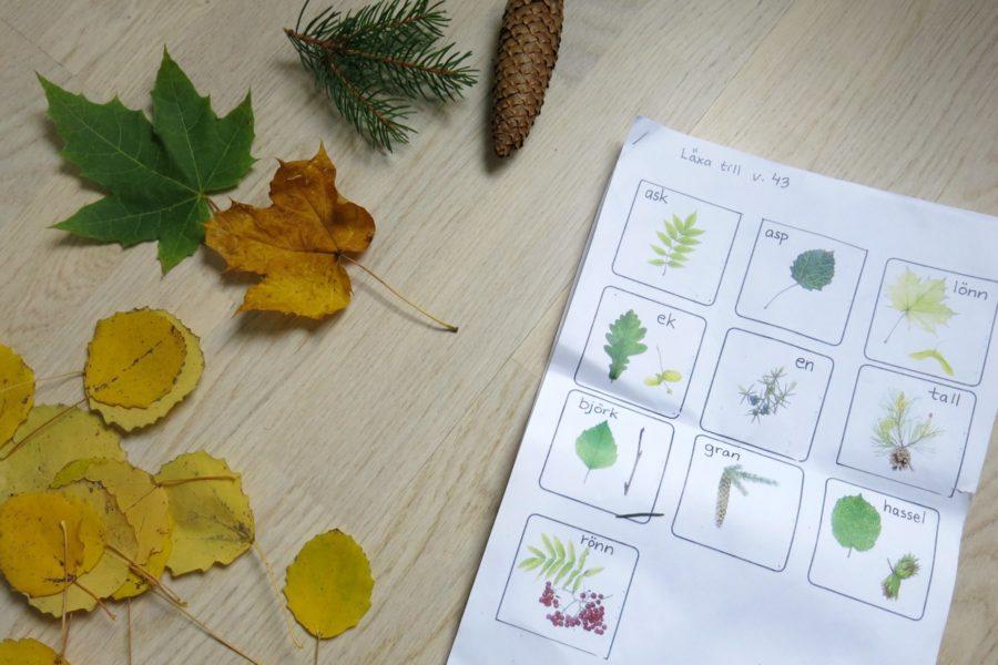 Olika sorters barr och löv