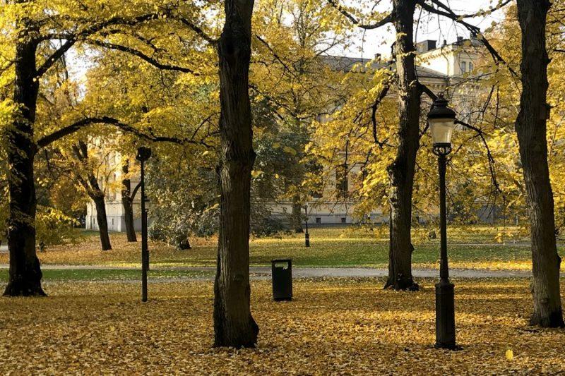 Humlegården fylld med gula löv.